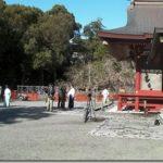 【写真あり】鎌倉鶴岡八幡宮の大銀杏が倒れる