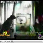 災難キャット『ぬこ動画-ハプニング集-』