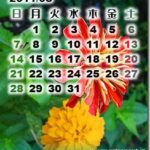 カレンダー無しも有り、カレンダー壁紙2011年8月