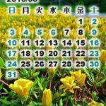 伊豆で石廊崎なカレンダー壁紙2015年5月