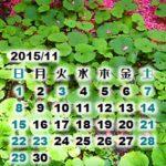 庭撮りなカレンダー壁紙2015年11月